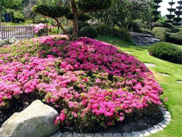 L005-azalia-japonska-kermesina-rose-6