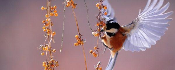 ptasi ogród
