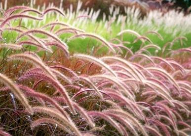 trawy-promo-baner